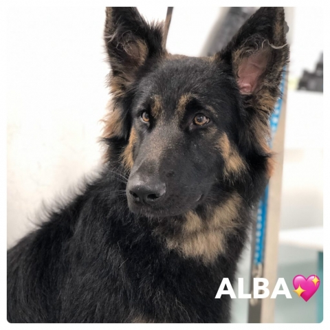 Pawgeous Mobile Dog Grooming - Alba
