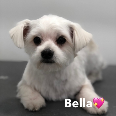 Pawgeous Mobile Dog Grooming - Bella