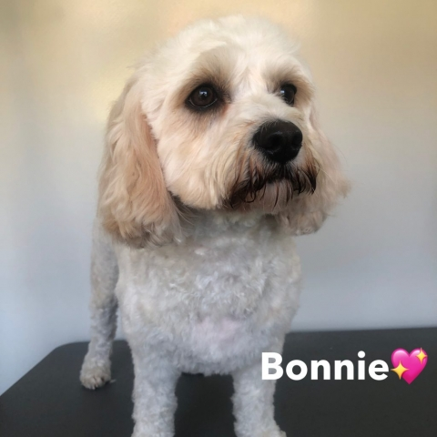 Pawgeous Mobile Dog Grooming - Bonnie