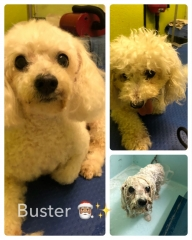 Pawgeous Mobile Dog Grooming - Buster