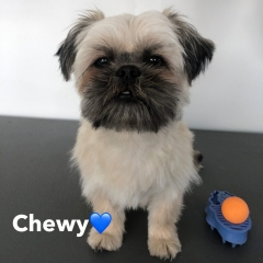 Pawgeous Mobile Dog Grooming - Chewy