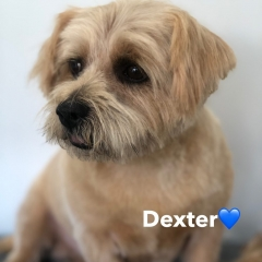 Pawgeous Mobile Dog Grooming - Dexter