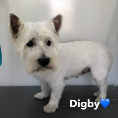 Pawgeous Mobile Dog Grooming - Digby