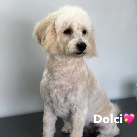 Pawgeous Mobile Dog Grooming - Dolci