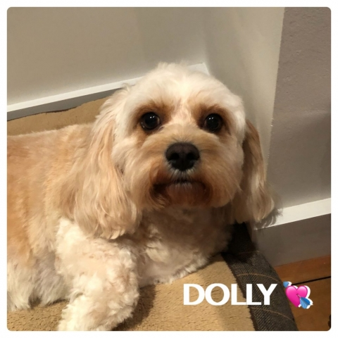 Pawgeous Mobile Dog Grooming - Dolly