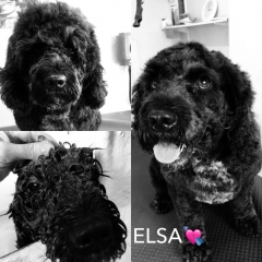 Pawgeous Mobile Dog Grooming - Elsa