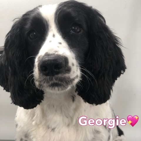 Pawgeous Mobile Dog Grooming - Georgie