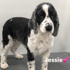 Pawgeous Mobile Dog Grooming - Jessie
