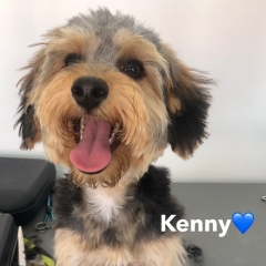 Pawgeous Mobile Dog Grooming - Kenny