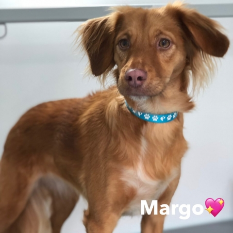 Pawgeous Mobile Dog Grooming - Margo