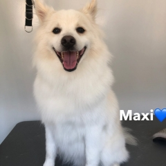 Pawgeous Mobile Dog Grooming - Maxi