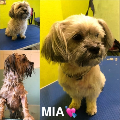 Pawgeous Mobile Dog Grooming - Mia