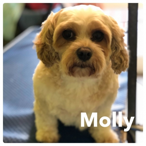 Pawgeous Mobile Dog Grooming - Molly