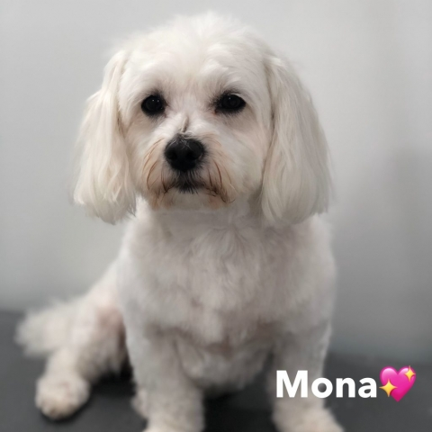 Pawgeous Mobile Dog Grooming - Mona