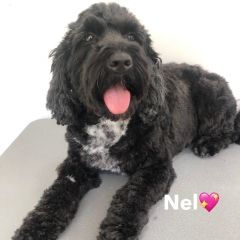 Pawgeous Mobile Dog Grooming - Nel