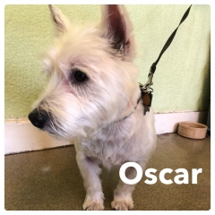 Pawgeous Mobile Dog Grooming - Oscar
