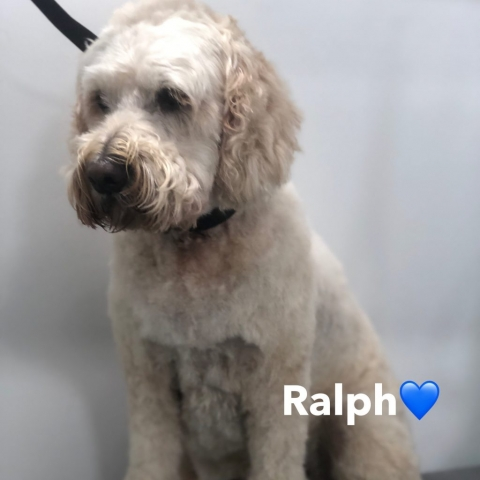 Pawgeous Mobile Dog Grooming - Ralph