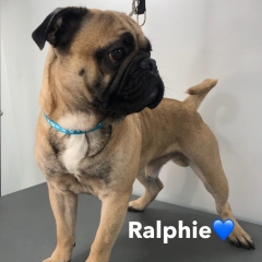 Pawgeous Mobile Dog Grooming - Ralphie