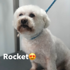 Pawgeous Mobile Dog Grooming - Rocket