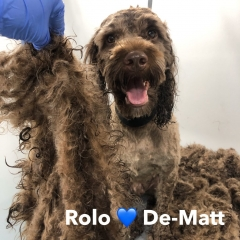 Pawgeous Mobile Dog Grooming - Rolo