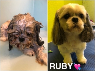 Pawgeous Mobile Dog Grooming - Ruby