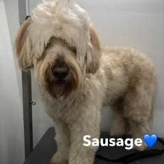 Pawgeous Mobile Dog Grooming - Sausage
