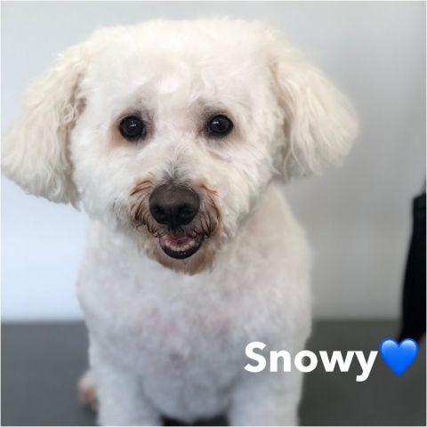 Pawgeous Mobile Dog Grooming - Snowy
