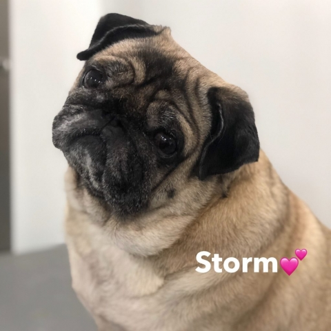 Pawgeous Mobile Dog Grooming - Storm