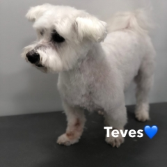 Pawgeous Mobile Dog Grooming - Teves