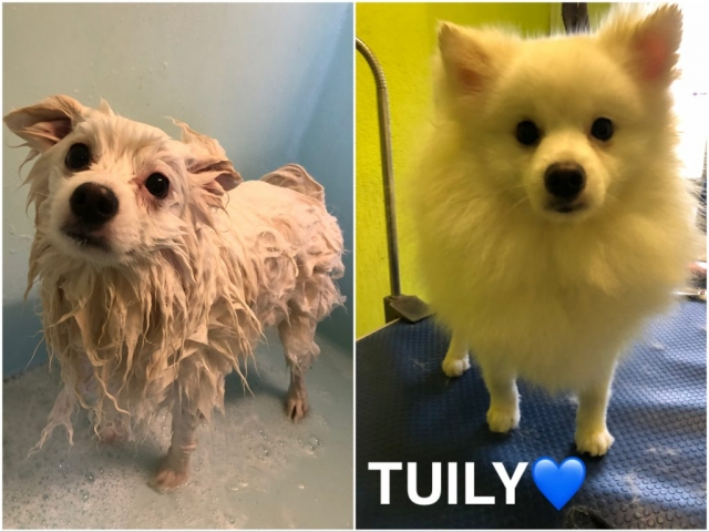 Pawgeous Mobile Dog Grooming - Tuily