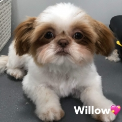 Pawgeous Mobile Dog Grooming - Willow