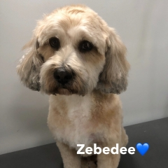 Pawgeous Mobile Dog Grooming - Zebedee