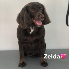 Pawgeous Mobile Dog Grooming - Zelda