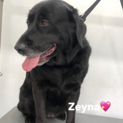 Pawgeous Mobile Dog Grooming - Zeyna